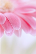 Preview iPhone wallpaper Pink gerbera, flower petals, blurring focus macro photography