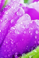Preview iPhone wallpaper Purple tulip flowers, crystal drops