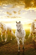 Preview iPhone wallpaper White horses in the prairie sunset