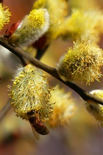 Preview iPhone wallpaper Willow bud in the spring, busy bees