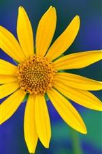 미리보기 iPhone 배경 화면 노란 꽃, 꽃잎 매크로, 배경을 흐리게