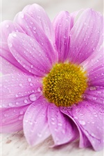 A pink flower petals with water drops macro photography