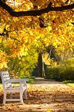 Preview iPhone wallpaper Autumn park, bench, yellow leaves