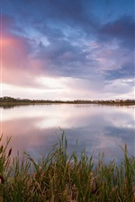 Preview iPhone wallpaper Canada landscape, lake, grass, reeds, evening, sky, clouds