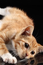 Preview iPhone wallpaper Cute cat, white paws, lying at desktop, reflection, black background