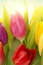 Preview iPhone wallpaper Different colors of tulip flowers