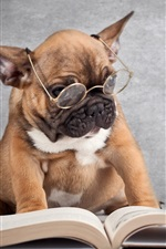 Preview iPhone wallpaper Dog wearing glasses reading a book