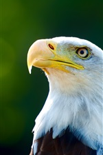 Preview iPhone wallpaper Eagle head close-up, white feathers