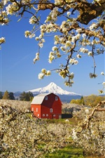 Preview iPhone wallpaper Garden of apple trees, white flowers blooming, red house