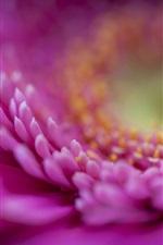 Preview iPhone wallpaper Gerbera pink petals macro, blurred background