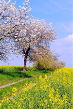 Germany spring nature scenery, fields, flowers, blue sky