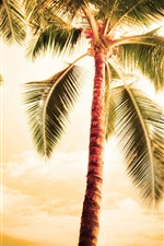 Preview iPhone wallpaper Hawaii, hot summer, palm trees