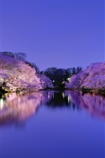 Preview iPhone wallpaper Japan, Osaka, city park at night, lake, lights, cherry trees flowering