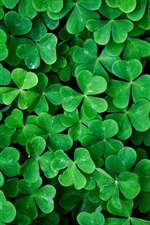 Preview iPhone wallpaper Shamrock green leaves macro photography