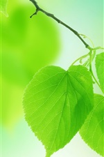 Preview iPhone wallpaper Summer green leaves close-up, blurred background