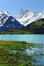 Switzerland, Bern, nature scenery, snowy mountains, river, grass, flowers