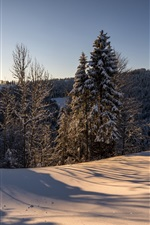Preview iPhone wallpaper Switzerland, Hulftegg, nature winter landscape, morning, sun, forest, snow