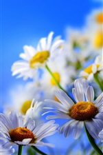 Preview iPhone wallpaper White daisy flowers, yellow butterfly, blue sky
