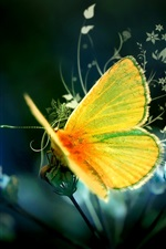 Preview iPhone wallpaper Art design yellow butterfly
