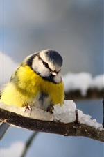 Preview iPhone wallpaper Bird photography, titmouse, twigs, winter snow