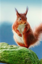 Preview iPhone wallpaper Brown squirrel standing on a rock