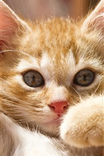 Preview iPhone wallpaper Cute kitty pose