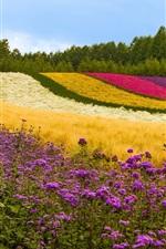 미리보기 iPhone 배경 화면 다른 색 꽃 필드, 나무, 일본