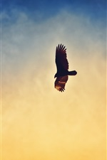 Preview iPhone wallpaper Eagle flying in the sunset sky