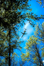 Preview iPhone wallpaper Forest trees, blue sky, plane flying over the forest