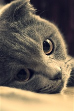 Preview iPhone wallpaper Gray cat eyes close-up