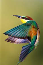 Preview iPhone wallpaper Kingfisher flight speed photography