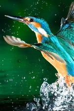 Preview iPhone wallpaper Kingfisher leave lake water