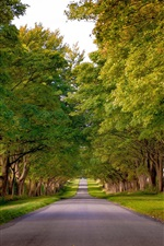Preview iPhone wallpaper Kings Avenue, Sandringham, Norfolk, England, trees, road