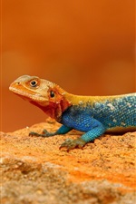 Preview iPhone wallpaper Rainbow Lizard