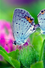 Preview iPhone wallpaper Spring nature, butterfly, green leaves, flower