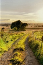 Preview iPhone wallpaper Summer nature scenery, road, trees, fence, grass, sun