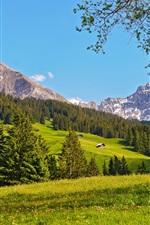 Швейцария пейзаж, горы, луг, лес, деревья