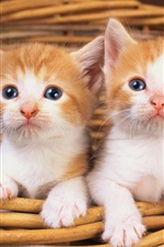 Preview iPhone wallpaper Two cute kittens in basket