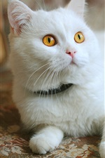 Preview iPhone wallpaper White cat, yellow eyes