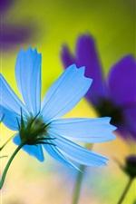 Pétalas de flores azuis, close-up