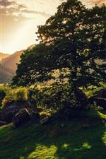 Preview iPhone wallpaper Britain nature landscape, trees, sun, green, hills