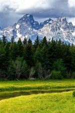Preview iPhone wallpaper Grand Teton National Park, mountains, forest, trees, creek
