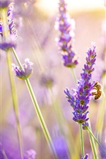 Preview iPhone wallpaper Lavender flowers, bee, sun