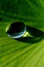 Preview iPhone wallpaper Macro dew on lotus leaf