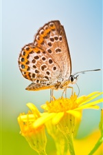 Preview iPhone wallpaper Spring butterfly, yellow flower, blurred background