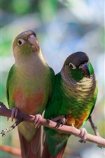 Preview iPhone wallpaper Two parrots bird, blurred background