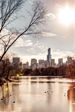 Afternoon sun, city, buildings, river, trees