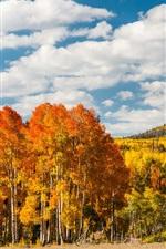 Árvores da floresta de outono, as folhas amarelas, monte