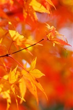 Preview iPhone wallpaper Autumn, maple tree, red leaves, blurred background