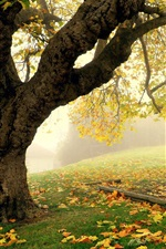 Preview iPhone wallpaper Autumn park scenery, tree, fog, leaves